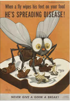 public health poster showing a fly spreading disease