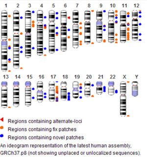 Human Genome Overview
