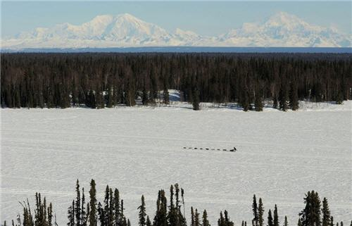 Dog sled team in the Alaskan wilderness