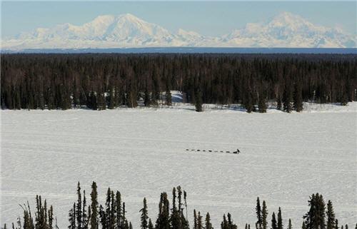 Dog sled team in the Alaskan wilderness