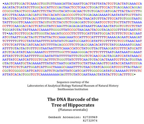 DNA Barcode for the Tree of Hippocrates, Plantanus orientalis