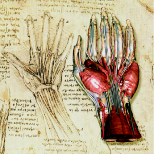 The human hand derived from Visible Human data next to a drawing of the hand's anatomy by Leonardo DaVinci