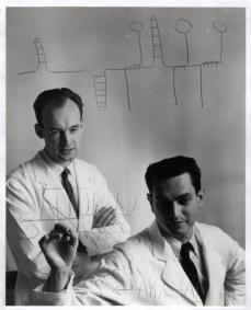Marshall Nirenberg and Heinrich Matthaei writing