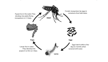 Mosquito evolve from eggs, to larva to pupae to adults.
