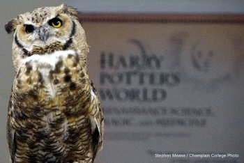 An owl gazes forward, the opening panel of the Harry Potter traveling exhibition visible behind him.