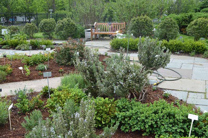 The Magical, Medicinal NLM Herb Garden | NLM in Focus