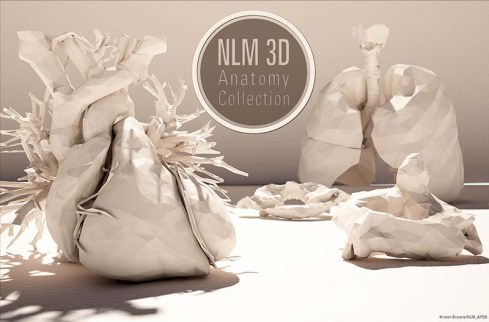 detailed paper models of the human heart and lungs