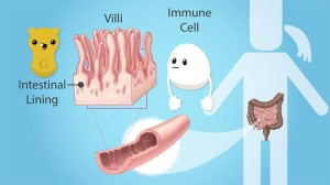 drawings of villi and an immune cell