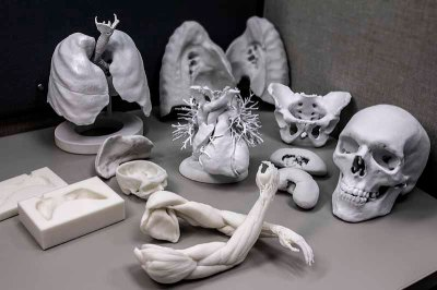 assorted anatomical models, including a skull, a human heart, and lungs