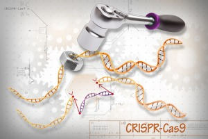 diagram demonstrating how CRISPR-Cas9 works