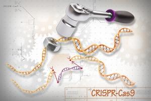 diagram demonstrating how CRISPR-Cas9 works