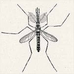 sketch of a mosquito, top view